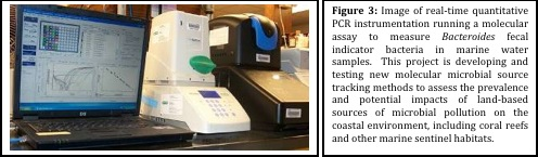 Figure 3: Image of real-time quantitative PCR instrumentation running a molecular assay to measure Bacteroides fecal indicator bacteria in marine water samples. This project is developing and testing new molecular microbial source tracking methods to assess the prevalence and potential impacts of land-based sources of microbial pollution on the coastal environment, including coral reefs and other marine sentinal habitats.
