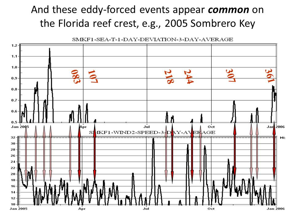 Slide: And these eddy-forced events appear common on the Florida reef crest, e.g., 2005 Sombrero Key